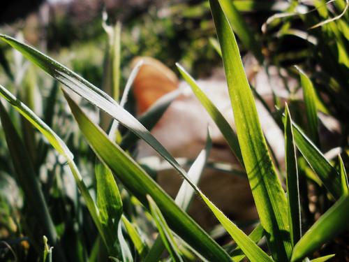 grass cat