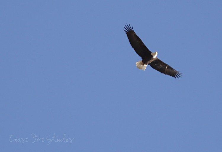 03-11-eagles3