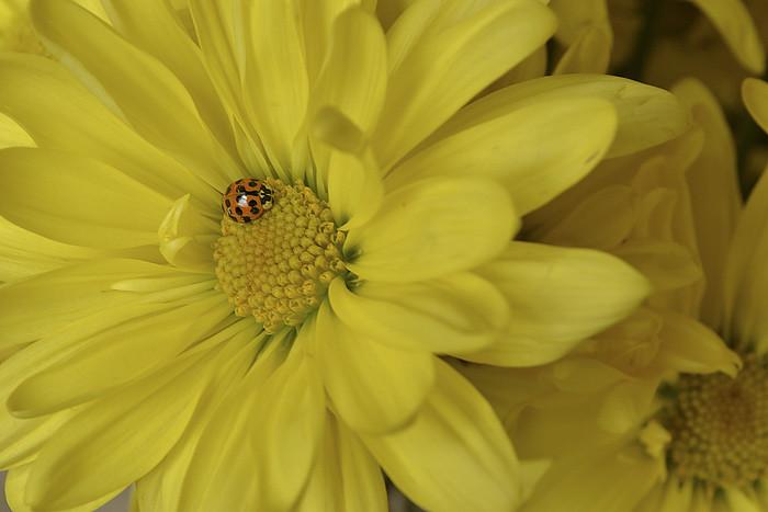 Yellow-SOOC