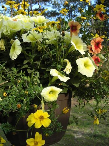2011 Spring Gardens