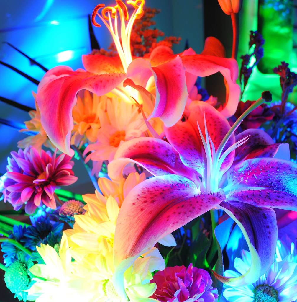 Stargazer Lilly Bouquets Lilly Bouquets Bloom Today