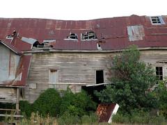 Tin Roof, Rusted 2 (dsjeffries) Tags: abandoned rust arkansas weatheredwood tuckerman deserted tinroof rustedmetal woodbarn oldwoodbarn rustedroof rustedtinroof tuckermanarkansas graywood jacksoncountyarkansas