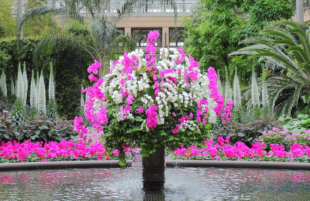 Merveilleux Longwood Gardens, March 2011 (John Frattura) Tags: Wallpaper Plant Orchid  Flower Philadelphia