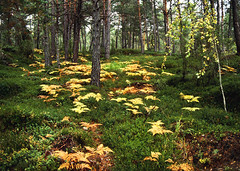 Farne im Herbst 1 (Bilderschreiber) Tags: wood autumn light fern green way licht herbst harvest grn wald farn clearing weg lichtung