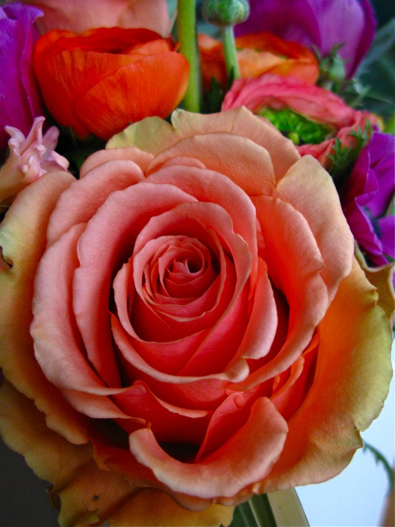 flowers ranunculus anemone rose orange pink 003