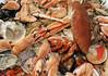 110320 fm 110321 © Théthi (thethi (pls, read my 1st comment, tks a lot)) Tags: nourriture animal mer saveur repas lunch gastronomie bruxelles brussels belgique belgium bestof2011 setmars setanimaux setsaveurs faves15 faves19