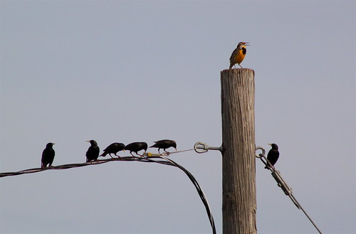 Meadowlark and Friends