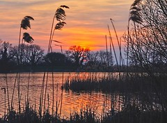 March Sunset (algo) Tags: sunset red england sky water reflections evening interestingness topf50 topv333 bravo europe silhouettes explore algo topf100 rosy 100f 50f wendoverlake westernturvillereservoir 110320 aykesburyvale