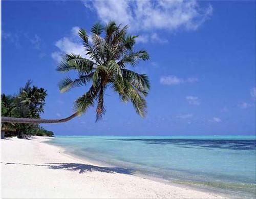sunny-beach-palm