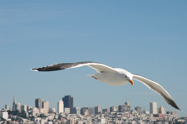 Day 90 - San Franciscan Seagull