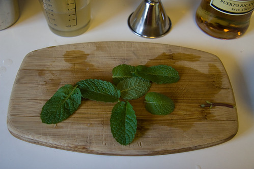 Freshly Picked Mint Leaves