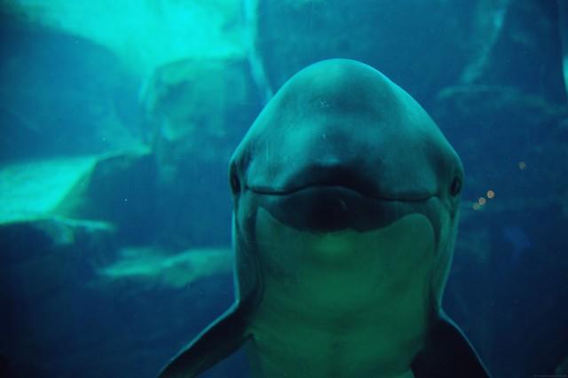 dolphin sayin hi.