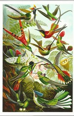 Hummingbirds (LillieBuggy) Tags: birds animals hummingbirds pretty