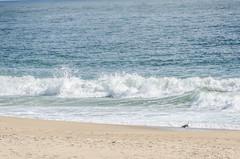 Atlantic Ocean (misterperturbed) Tags: delaware bethanybeach