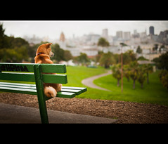 Watching the Rain Fall (kaoni701) Tags: sf sanfrancisco dog rain bench japanese 50mm spring suki shibainu dolorespark shibaken  d700