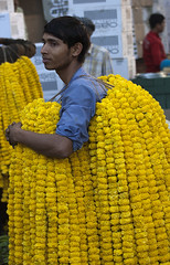 Marigold Seller (Koshyk) Tags: flower market colourful cp mandi flowermarket newdelhi freshflowers flowermandi hanumanmandir wholesaleflowermarket flowerbazaar colourfuldelhi