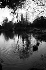 Black reflections (Sokleine) Tags: bw paris france nature reflections landscape shadows nb 75 paysage iledefrance parc reflets 92 contrejour ombres bagatelle spiegelungen