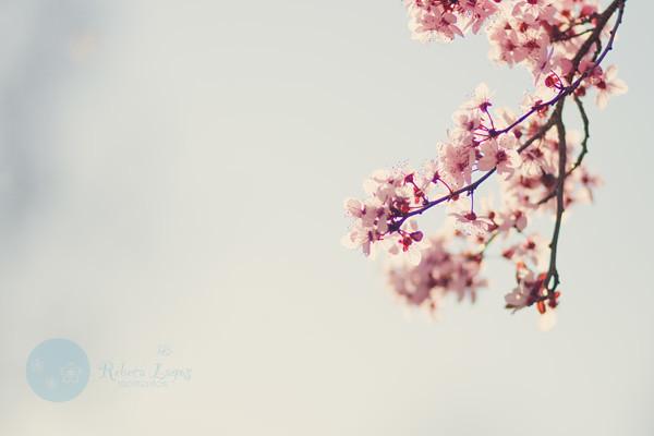 Spring??