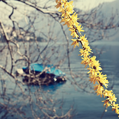 Day 302/365 (marco|g) Tags: flowers lake yellow canon lago 50mm switzerland boat ticino cz lugano carlzeiss ceresio project365 planart1450 5dmarkii