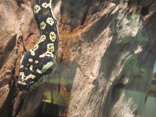 Mystery-Snake