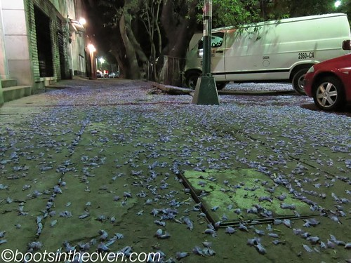 Carpet of Jacaranda blossoms