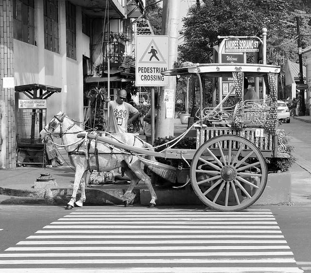 kabayo pedestrian