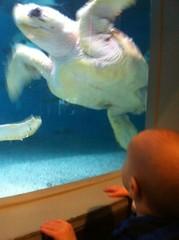 Huge turtle!