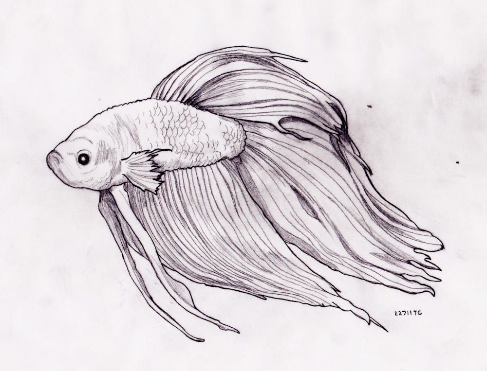 The Worldu0026#39;s Best Photos Of Betta And Sketch - Flickr Hive Mind