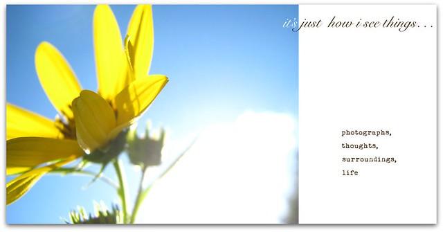 blog banner spring 2011_vote_1