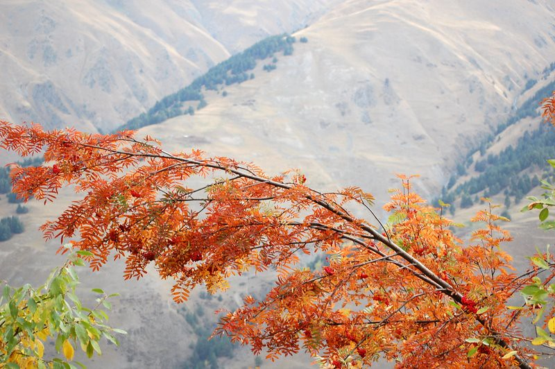 Autumn in Tusheti