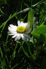 Inspiring spring VI
