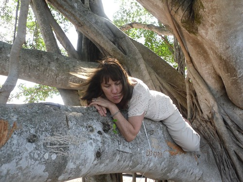 mammerrick climing the banyan tree