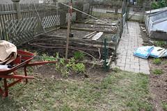 pea planting 042