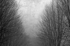 Loveless Landscape (Eyes Like A Shutter) Tags: trees blackandwhite bw tree art texture love nature composition photoshop canon outdoors photography focus mood gloomy emotion artistic pov grunge foggy artsy canonrebel scratched youngphotographers