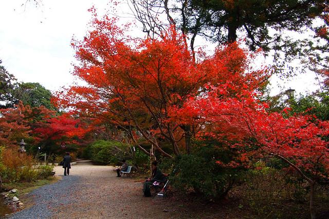20101120_110002_栄山寺