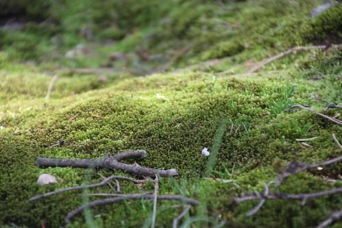 小高い丘のような苔