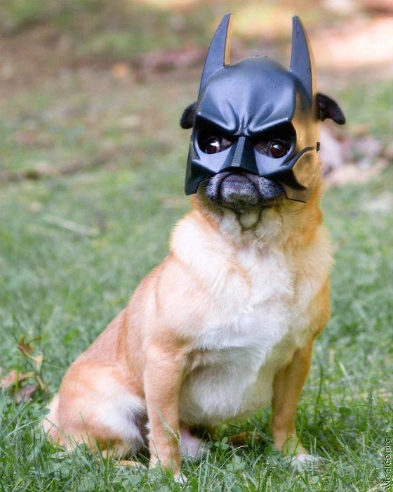 batman-fan72