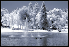 1st Infrared Shot (edpuskas) Tags: lake fountain nikon infrared walnutcreek convertedinfrared heatherfarmpark nikond3100