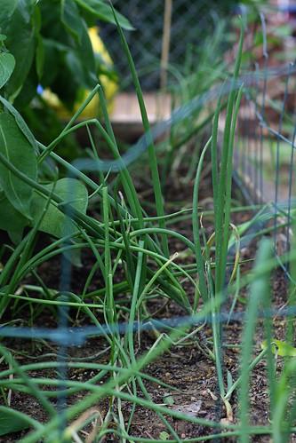 gardengrows9