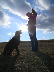 Basking in the light of the moment (rburtzel) Tags: park blue sky dog sun beautiful grass silhouette clouds goldenretriever puppy golden day sitting