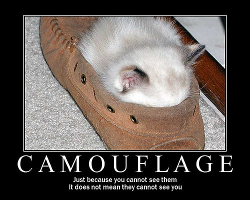 funny_cat_pictures_003