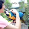 Parrot Love (Linus & the Feel Good Factory) Tags: bird love animal kiss macaw avian araararauna beastiality blueandyellowmacaw àlarecherchedutempsperdu