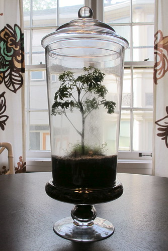 My new Terrarium