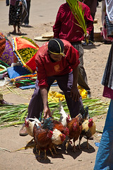 Boy selling Chicken in front of Maryam Church on Palm Sunday, Entoto Mountain, Addis Abeba (pictorlucis) Tags: africa trip travel portrait people canon culture tribal tribes april afrika tradition ethiopia tribe ethnic ethnology nomadic palmsunday 2011 etiopa addisabeba ethnie   etipia maryamchurch  entotomountain