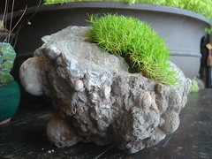 "Scotch Moss in Geode • <a style=""font-size:0.8em;"" href=""http://www.flickr.com/photos/51721355@N02/5763314210/"" target=""_blank"">View on Flickr</a>"