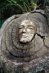 face in the tree at St. Simmons (jojomomof4) Tags: familyfunday