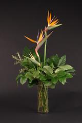 surinder 061 (Colourbox Floral) Tags: surinder proflo