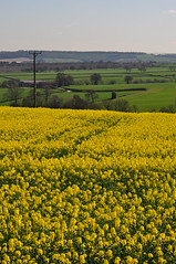 View from Flockton Village (littlestschnauzer) Tags: uk flowers west green field grass yellow rural gold countryside nikon view bright yorkshire farming farmland hills elements oil fields crops grassland lanscape rapeseed flockton d5000