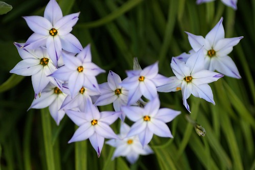 The Stars of Spring