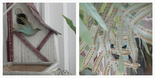 birdhouse and fern